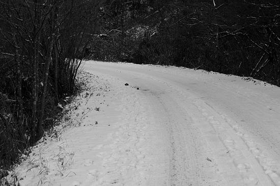 残雪海上の森-1
