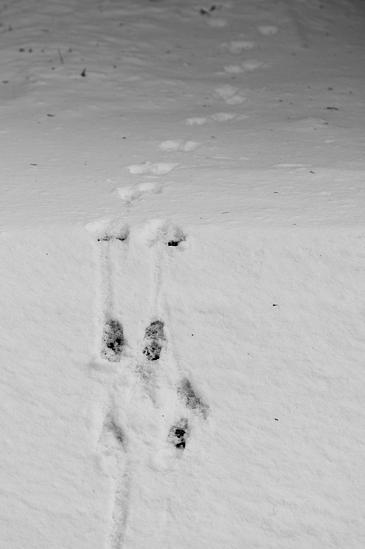 残雪海上の森-10