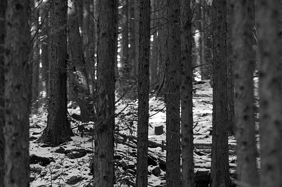 残雪海上の森-12