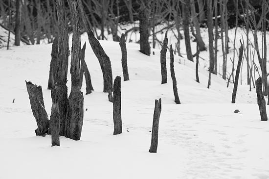 残雪海上の森-13