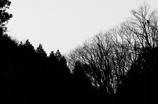 残雪海上の森-14