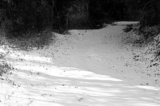残雪海上の森-2
