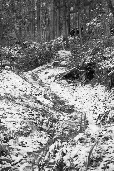 残雪海上の森-3
