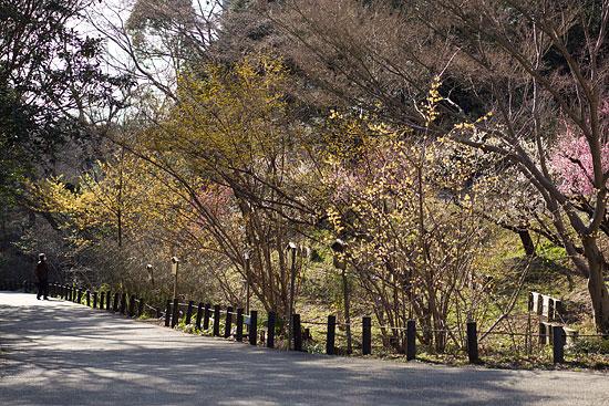 東山植物園2-10