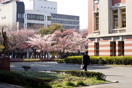 名城桜-11