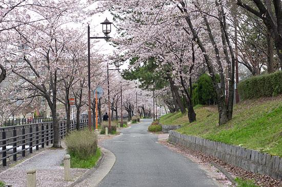 桜便り17-2