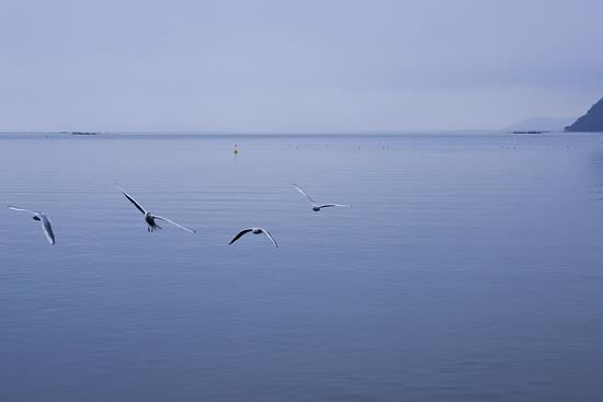 奥琵琶湖2-7