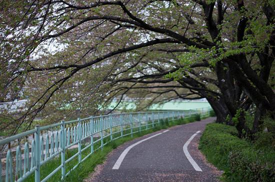 桜便り21-12