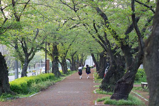桜便り21-16