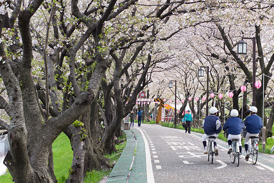 桜便り21-6