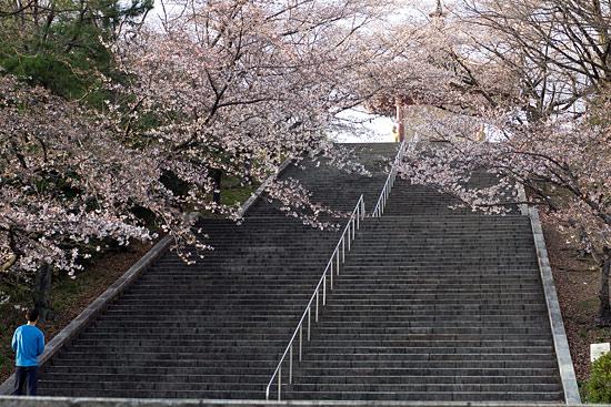 桜便り2-9