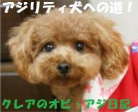 アジリティ犬への道!クレアのオビ・アジ日記