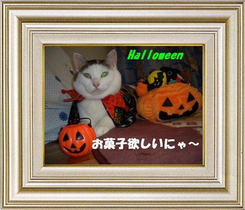 ねこ 猫 ハロウィン祭り 07番
