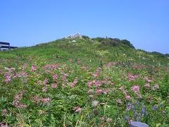 伊吹山のお花